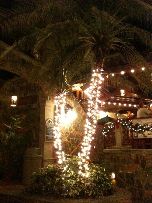 Holiday Palm Lit