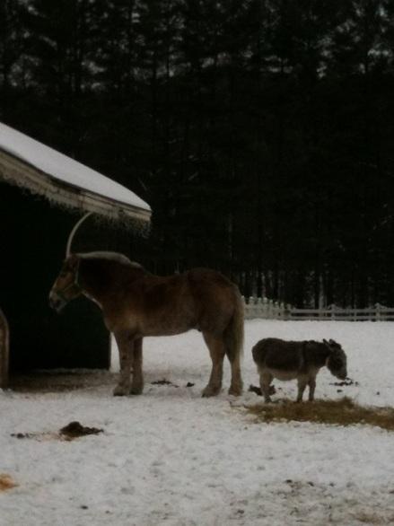 Jackson Horse and Burro
