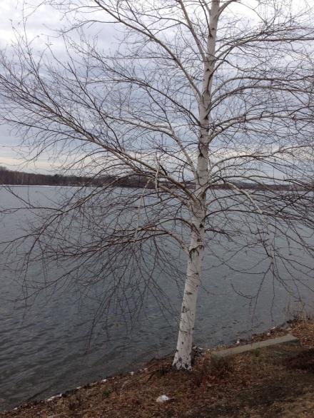 Benjamin Moore Birch Tree