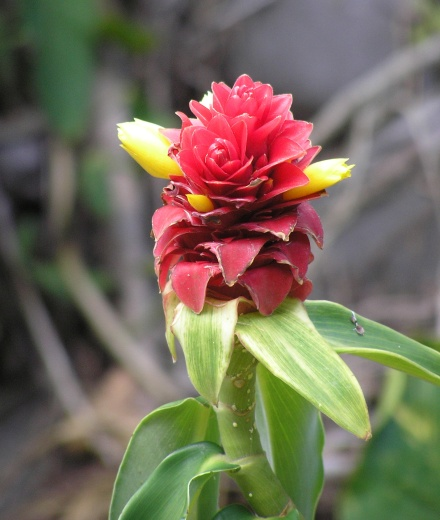Fern Grotto Flower