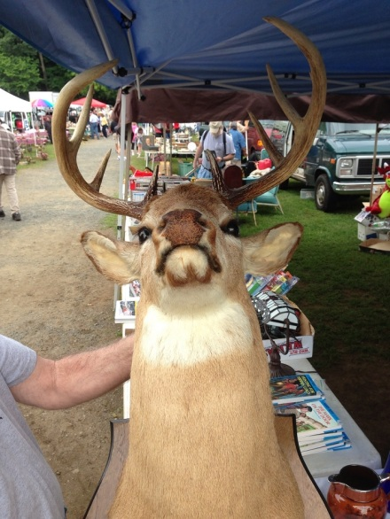 Flea Deer Head