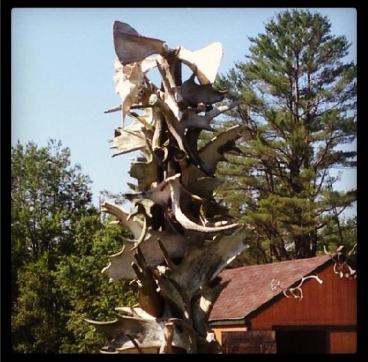 Maine Antler Tree