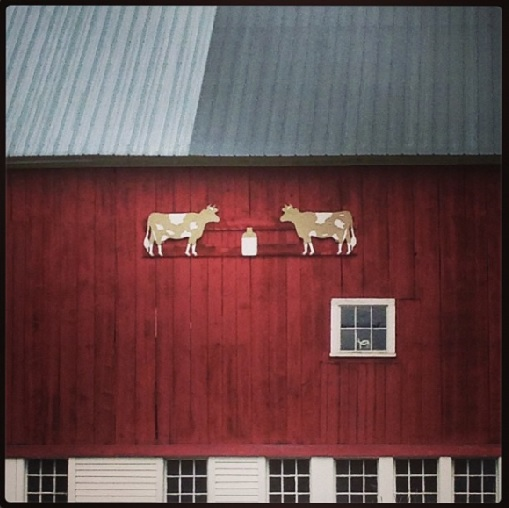 Cow & Barn Maine