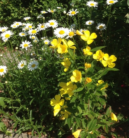 Daisies and Yellow Flower