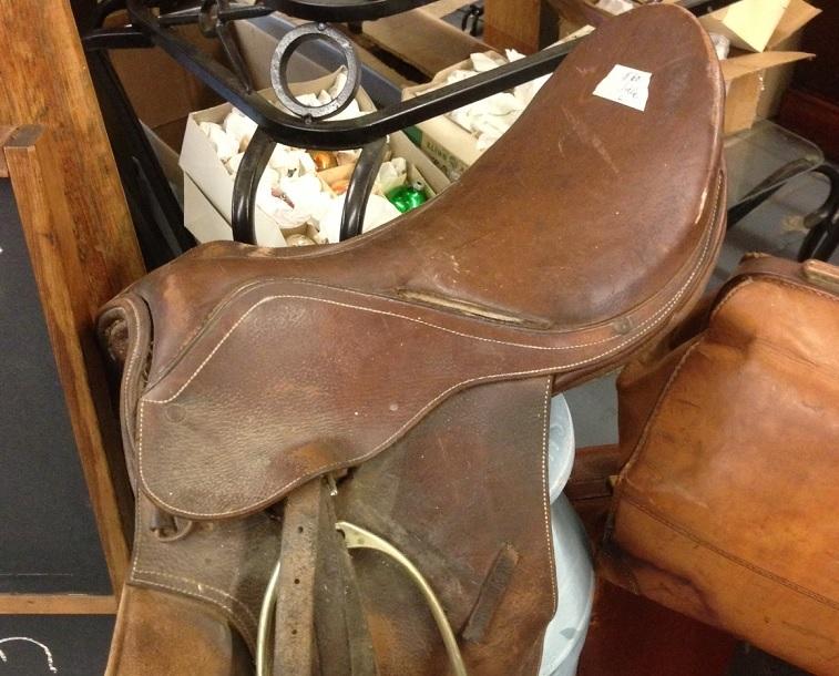 flea saddle up
