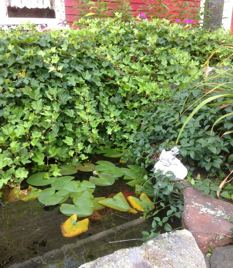 Pond with frog