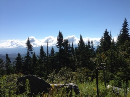 Vermont Mt. Mansfield Trees