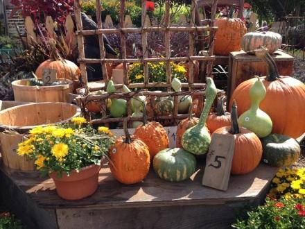 Pettengill Farm Pumpkin Vignette