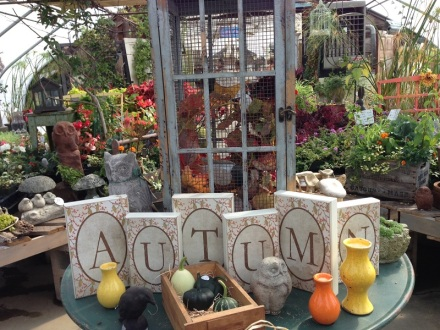 Pettengill Greenhouse Display Autumn