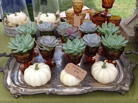 Succulents by Fleurish Home and Garden