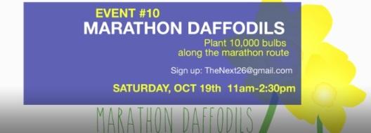 Next 26 Marathon Daffodils