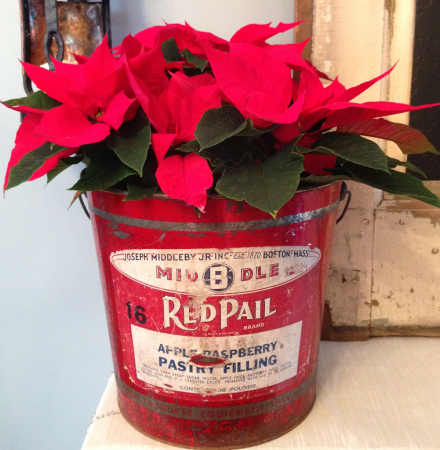 Raspberry Pail with Poinsettia