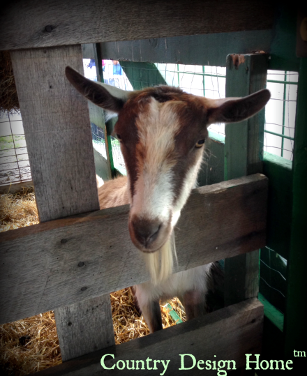 Country Living Fair Goat
