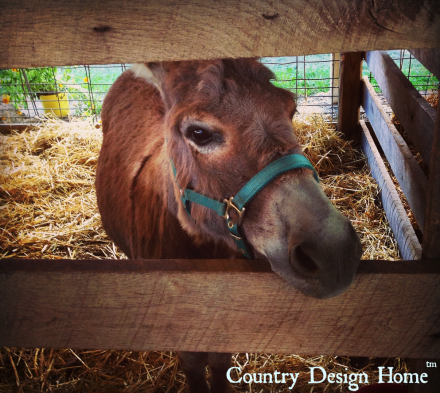 Donkey at Country Living Fair